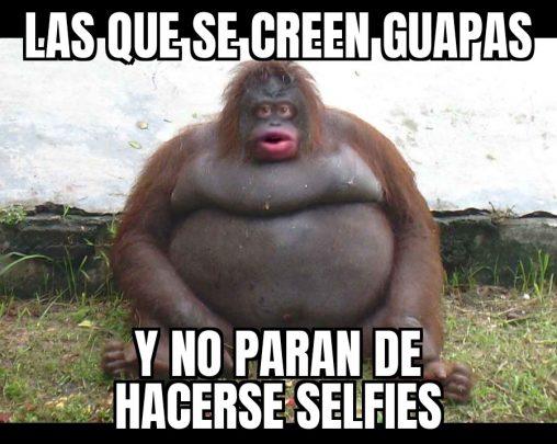 meme gorila selfies