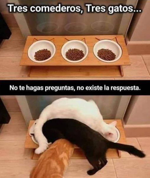 meme gatos catmemes TresComederosTresgatos